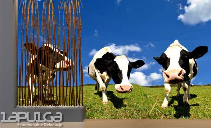 fototapeta krowy