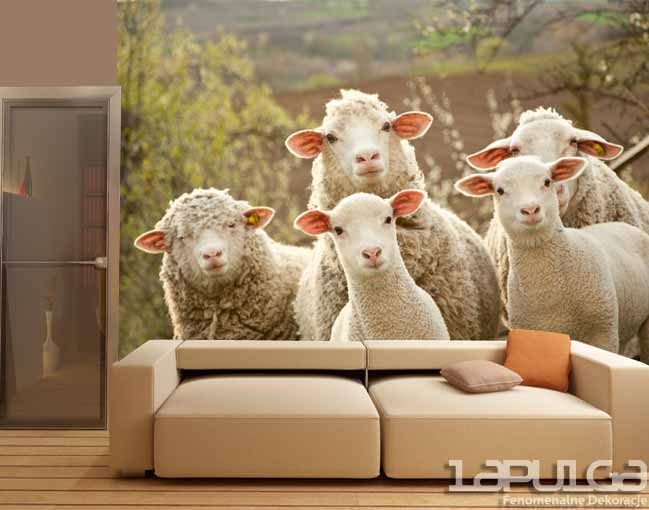 fototapeta owce