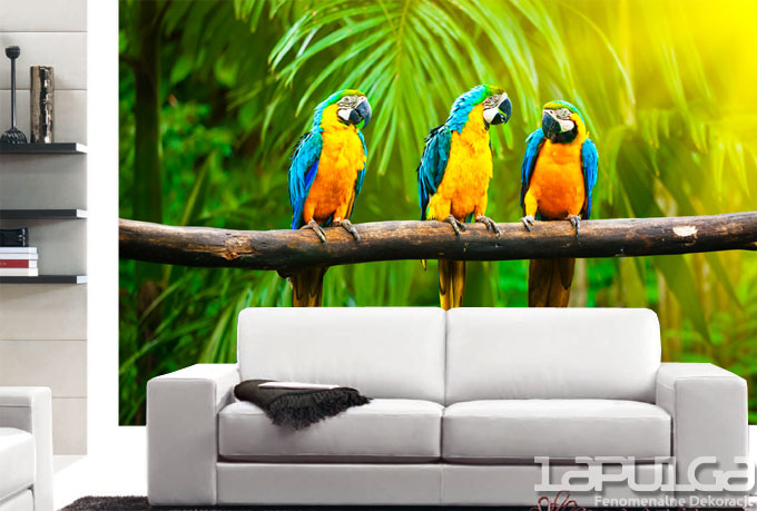 fototapeta papugi