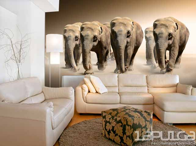 fototapeta slonie