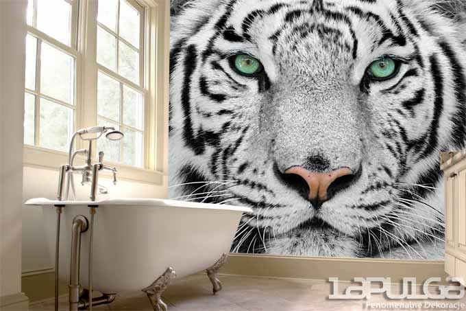 fototapeta tygrys